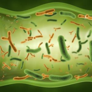 Бактериоз кишечника у детей